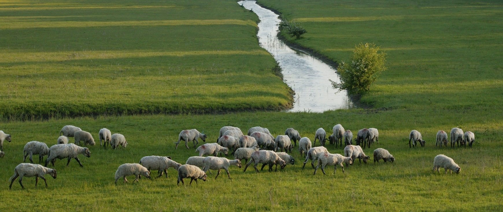 New Shepherds Orientation and Seasoned Shepherds Revitalization